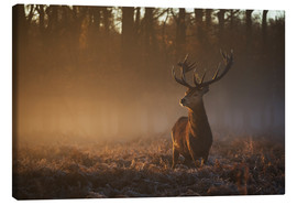 Canvas print  Stag in Autumn Sunrise - Alex Saberi