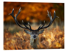 Acrylic print  The stag king of fire - Alex Saberi