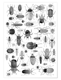 Premium poster  Beetles, black and white - Nic Squirrell