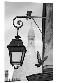 Acrylic print  Montmartre pigeons with Sacre Coeur