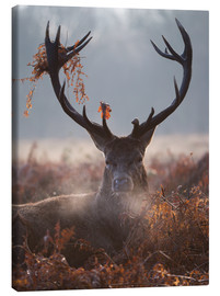 Canvas print  Deer Stag in Winter - Alex Saberi