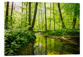 Acrylic print  Fresh green forest - Oliver Henze