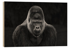 Wood print  Portrait of a Gorilla - Manuela Kulpa