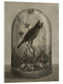 Acrylic print  Curiosities Cabinet Cat Owl - Terry Fan