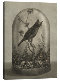 Canvas print  Curiosities Cabinet Cat Owl - Terry Fan