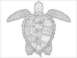 Colouring poster  Big sea turtle