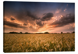 Canvas print  Grain field | After the storm - Kristian Goretzki