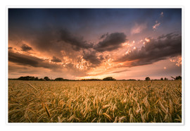 Premium poster Grain field | After the storm