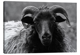 Canvas print  Grey Heidschnucke - Sheep - Martina Cross