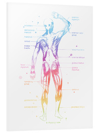 Foam board print  Rainbow Musculator II - Mod Pop Deco