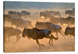 Canvas print  Wildebeests during the great migration, Serengeti - age fotostock