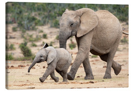 Canvas print  African elephant and calf