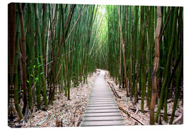 Canvas print  Trail through the bamboo forest - Pacific Stock