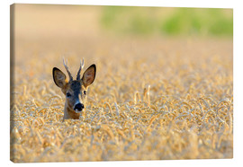 Canvas print  A deer in the field - Radius Images
