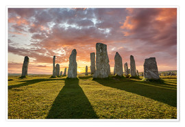 Premium poster  The plants of Callanish - age fotostock