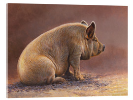 Acrylic print  Pig in the wallow