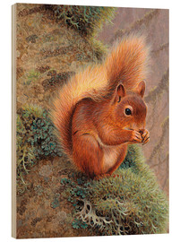 Wood print  Squirrel with nut - Ikon Images
