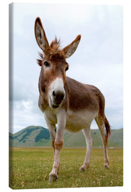 Canvas print  Portrait of the donkey - Click Alps