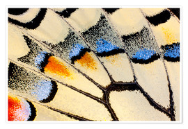 Premium poster Detail of a butterfly wing