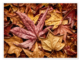 Premium poster Autumn leaves