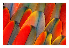 Premium poster Plumage of a macaw