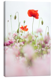 Canvas print  Poppies in the field - Bob Daalder