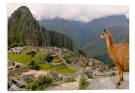 Foam board print  Lama looks at Machu Picchu - Don Mammoser