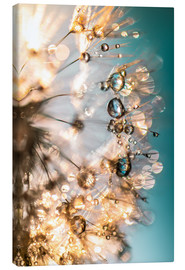 Canvas print  Dandelion summer in turquoise gold - Julia Delgado