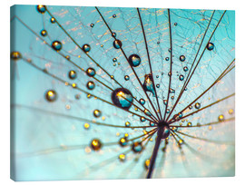 Canvas print  Dandelion - Umbrella Details - Julia Delgado
