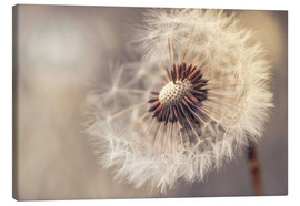 Canvas print  Dandelion naturalness - Julia Delgado