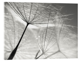 Acrylic print  Dandelion Umbrella in black and white - Julia Delgado