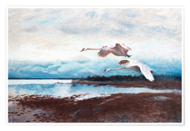 Premium poster  swans in flight - Bruno Andreas Liljefors