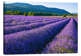 Canvas print  Lavender dream of Provence - Jürgen Feuerer