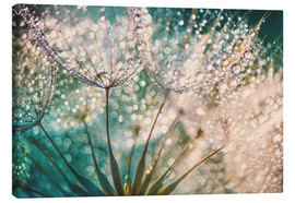Canvas print  Dandelion dropper dream - Julia Delgado