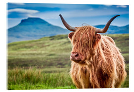 Acrylic print  Highland cattle, Scotland - Art Couture