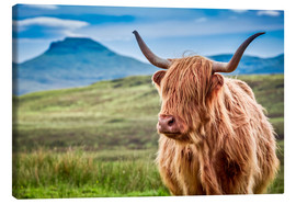 Canvas print  Highland cattle, Scotland - Art Couture