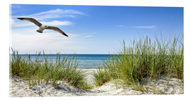 Acrylic print  Seagull flight over sand dunes, Baltic Sea - Art Couture