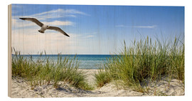 Wood print  Seagull flight over sand dunes, Baltic Sea - Art Couture