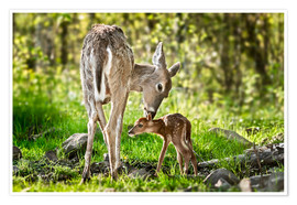 Premium poster  Mother and foal - Art Couture
